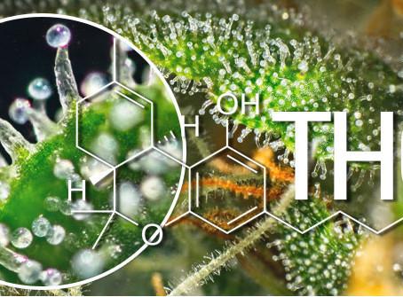 02/12/2020 Il thc diventa sostanza terapeudica.