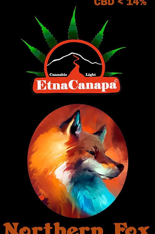 NORTHERN FOX < 14% CBD