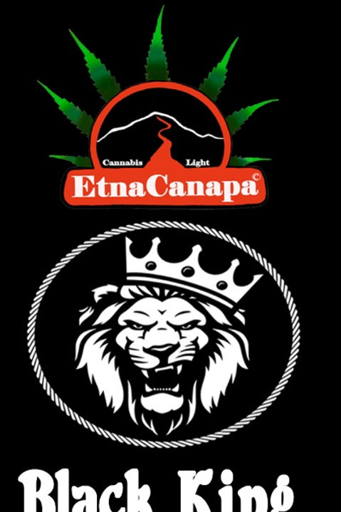 Black King (Charas) < 20% CBD