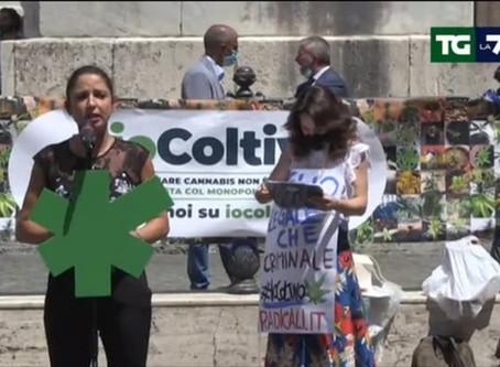 Roma, manifestazione 'Io coltivo' pro legge sulla cannabis