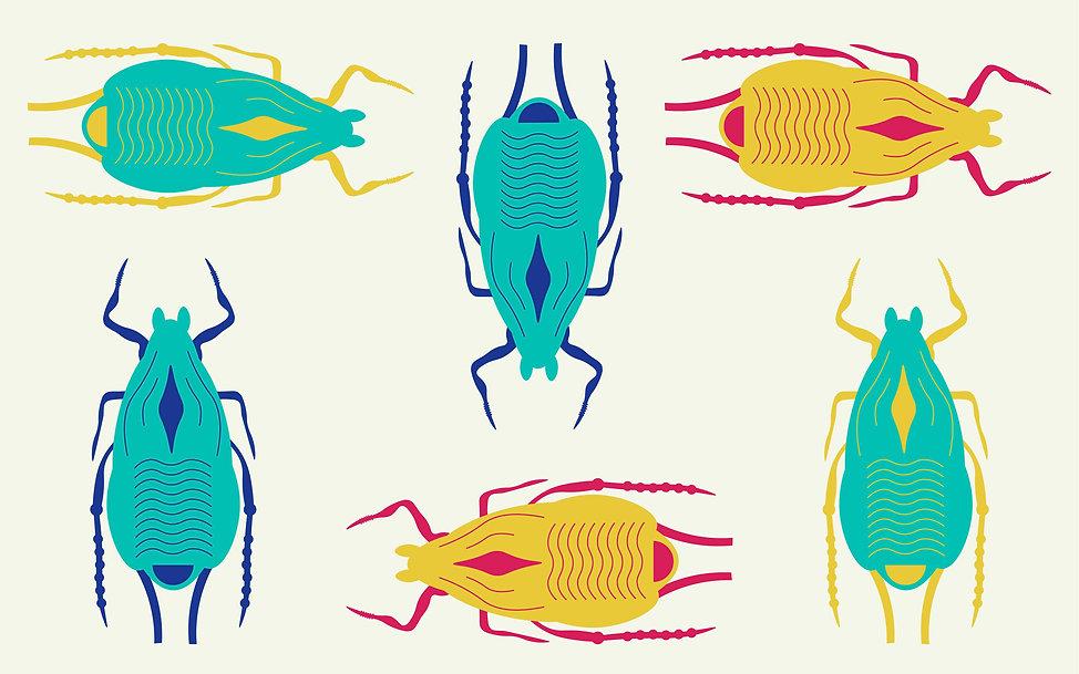 aphids body 1_2x copy.jpg