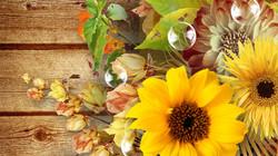 fall-flowers-mums-autumn-desktop-backgro