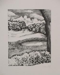 Nature Study (Bennington College)