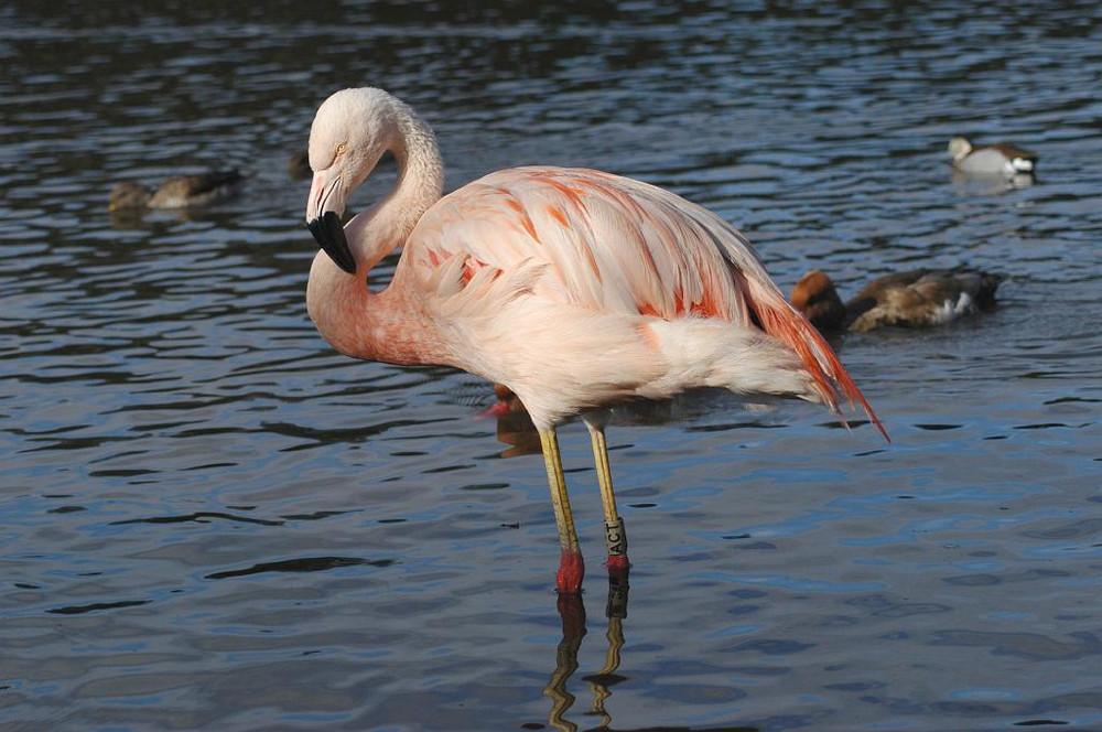 NT_Pink Flamingo.jpg