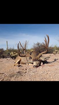 Mexico Mule Deer 69.PNG