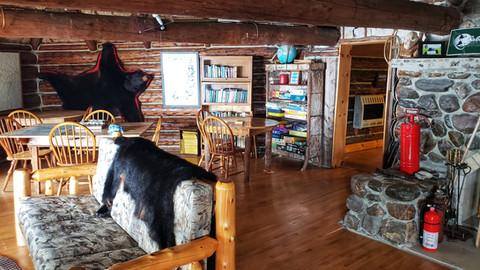 Black Bear Maine 25.jpeg
