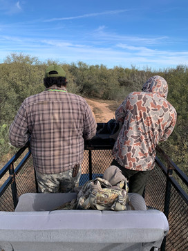 Mexico Mule Deer 36.JPG