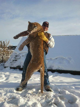 Mountain Lion Wyoming five star expediti