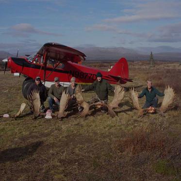 Moose Alaska 2.jpg