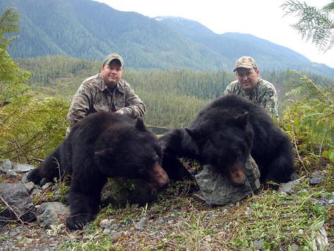 beargallery12.jpg