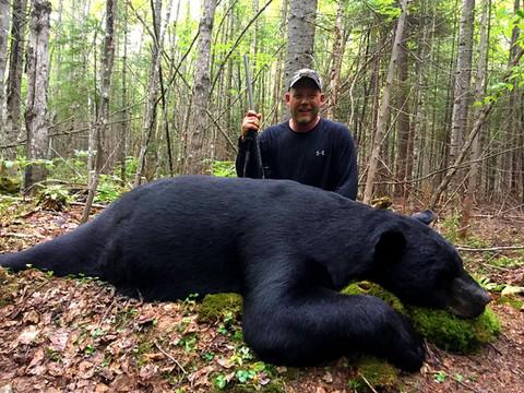 Black Bear Maine 30.jpg