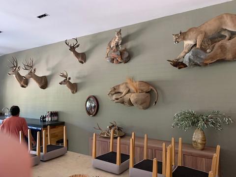 Mexico Mule Deer 46.JPG