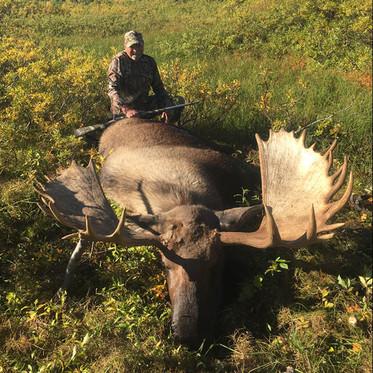 Moose alaska3.jpg