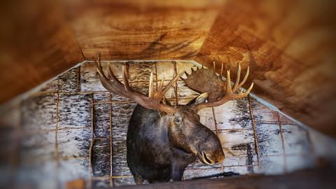 Black Bear Maine 23.jpeg