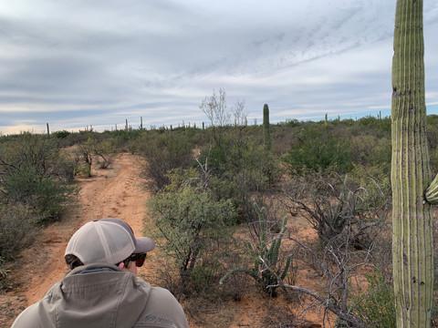 Mexico Mule Deer 39.JPG
