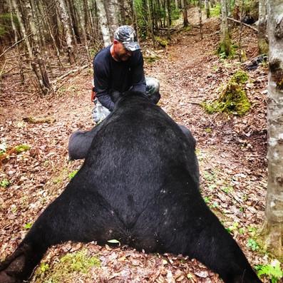 Black Bear Maine 32.jpeg