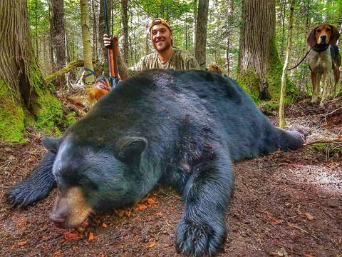 Black Bear Maine 0.jpeg