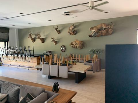 Mexico Mule Deer 51.JPG