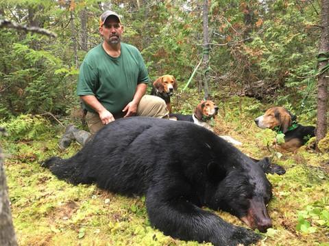 Black Bear Maine 36.jpg