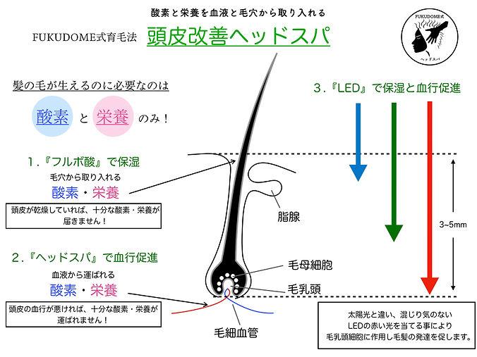 FUKUDOME式育毛法のコピー.001.jpeg