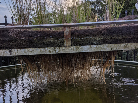 First wetlands planting cycle concludes (May 2021)