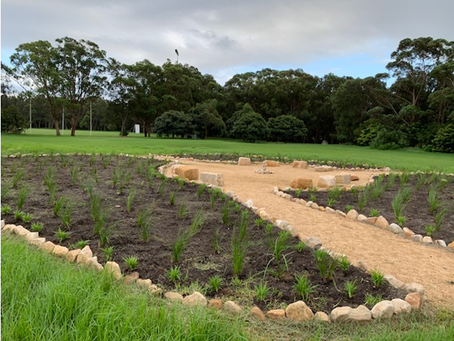 Plantings at new Stirgess Reserve Gardens (10 Mar 2020)