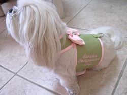 Service Companion Dog Outfit