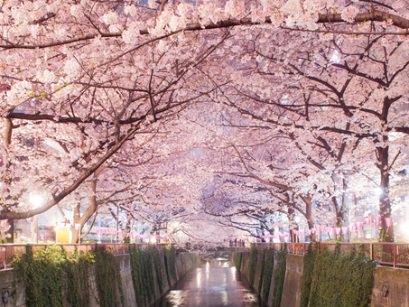 What is Hanami? The history and origins of Hanami.