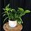 Thumbnail: 4'' WHITE POT WITH PLANT