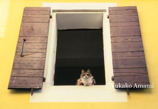 Une fenetre avec un chat-HP Amami.jpg