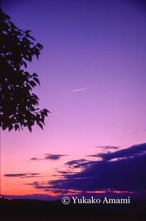 Provence-HP Amami.jpg