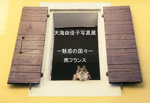 Une fenetre avec un chat HP Amami EX.jpg