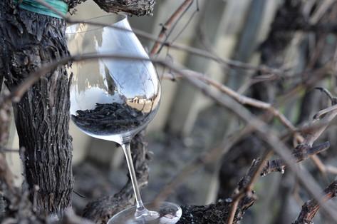 Blanchard Family Wines: Ode to Jene