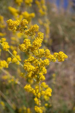 giallo giallo e un profumo sottile