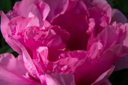 petali come fogli di carta stropicciati