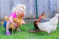 brigthens chicks
