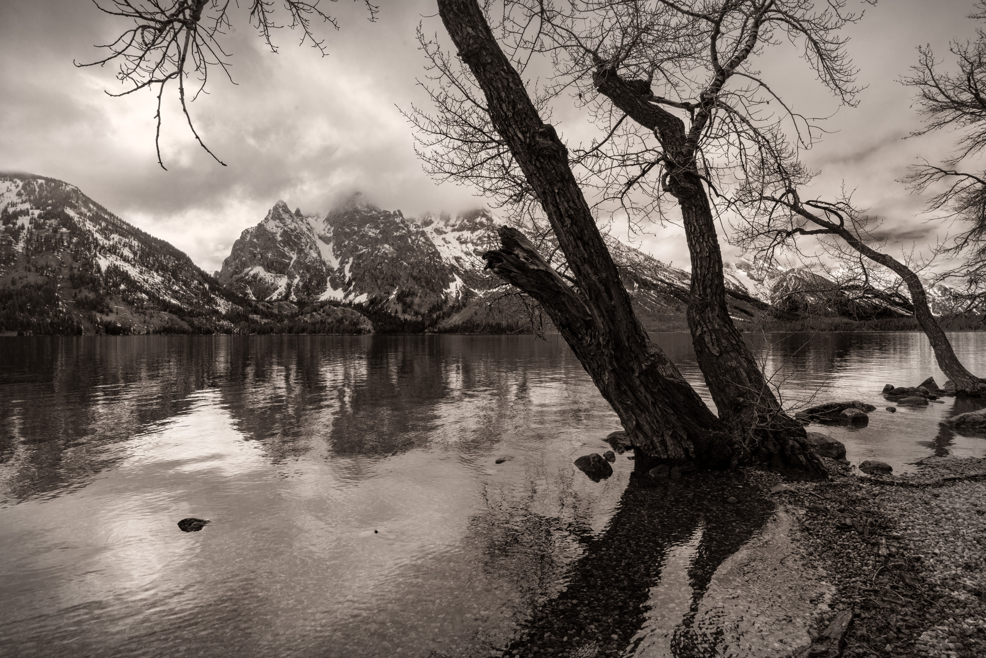 Jenny Lake Reflections 1