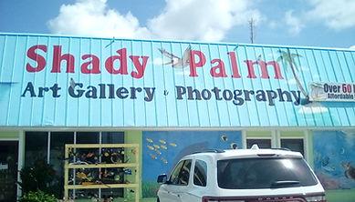Shady Palm.jpg