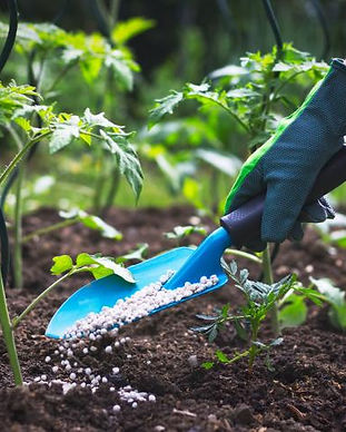 fertilizer-shutterstock_1087283084.jpg