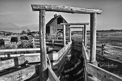 Cattle chute at SWR Cattle