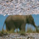 Eternal reflection - Elephant