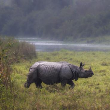 Pride of Assam