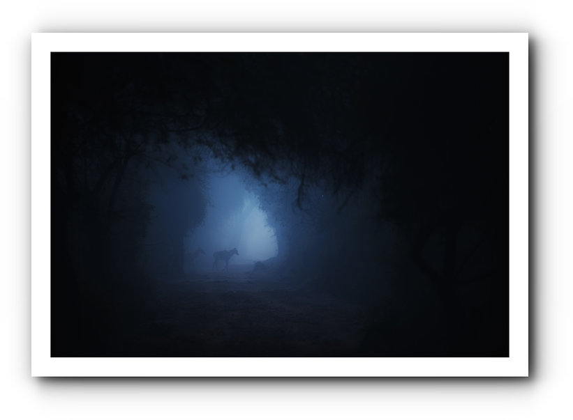 DSC_2549-Edit-2.jpg