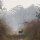 An alert doe