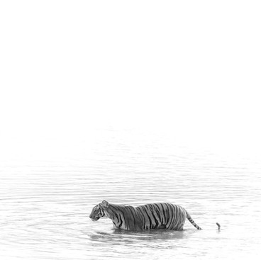 Silent ripples