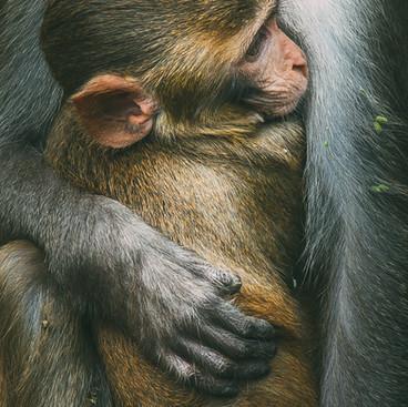 Mother's lap