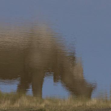Eternal reflection - Rhino