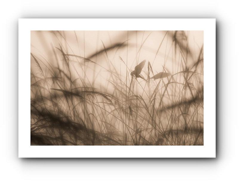 batch_earlybirds.jpg