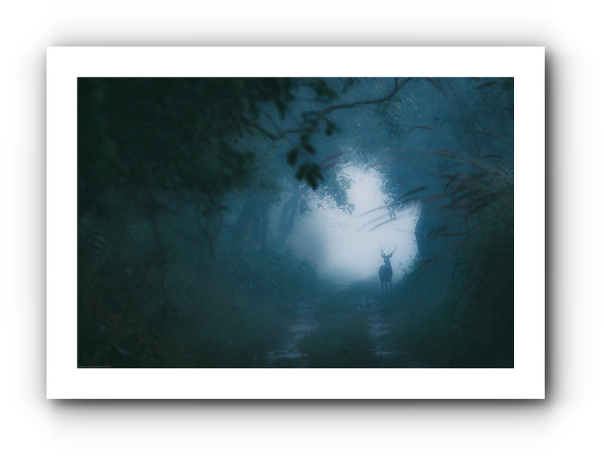 batch_soul of the woods.jpg