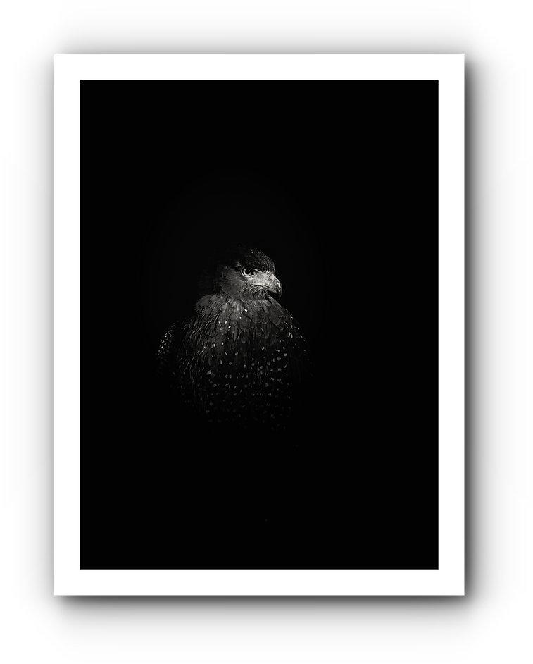 _MG_2770_2-Edit-2-Edit.jpg